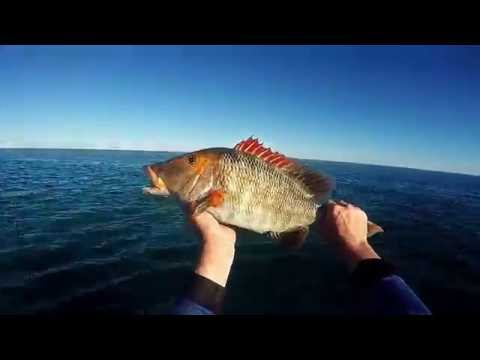 Red Throat Emperor Fitzroy Reef Fishing Lipper Sep16