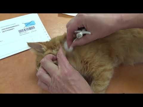 Meilleures salles de chat pour la datation