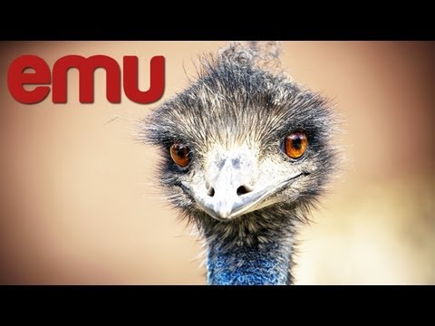 Start Emu Farm In India How To Start Emu Breeding Business India