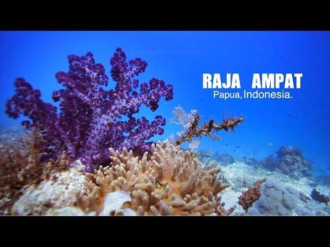 Raja Ampat, Papua Barat, Indonesia | Underwater Video