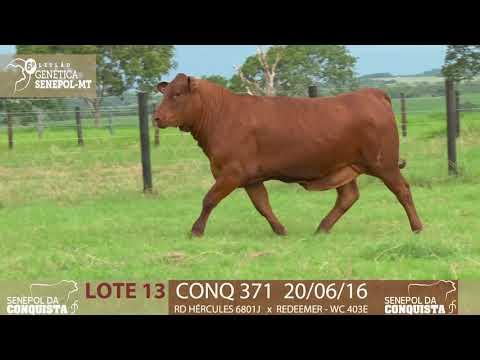LOTE 13 CONQ 371