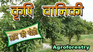 Agroforestry in India  | कृषि वानिकी : लाभ की खेती है  | Climate Smart Agriculture