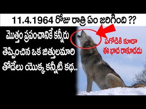 |పాపం పగోడికి కూడా ఈ బాధ రాకూడదండి .. Story Of The Lobo..A Great Wolf|Telugu Real Facts