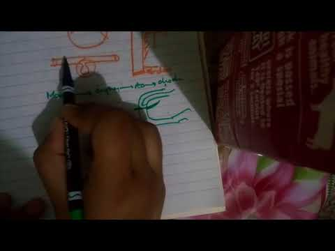 DEVELOPMENT of ALIMENTARY CANAL now very simple part 1