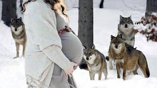 Волчья Стая Спасла Беременную Женщину В Лесу Зимой То Что С Ней Случилось Шокировало Всех