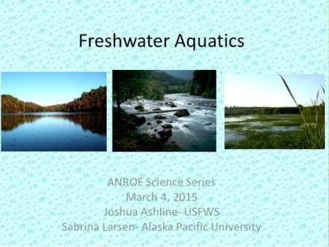 Freshwater Aquatics
