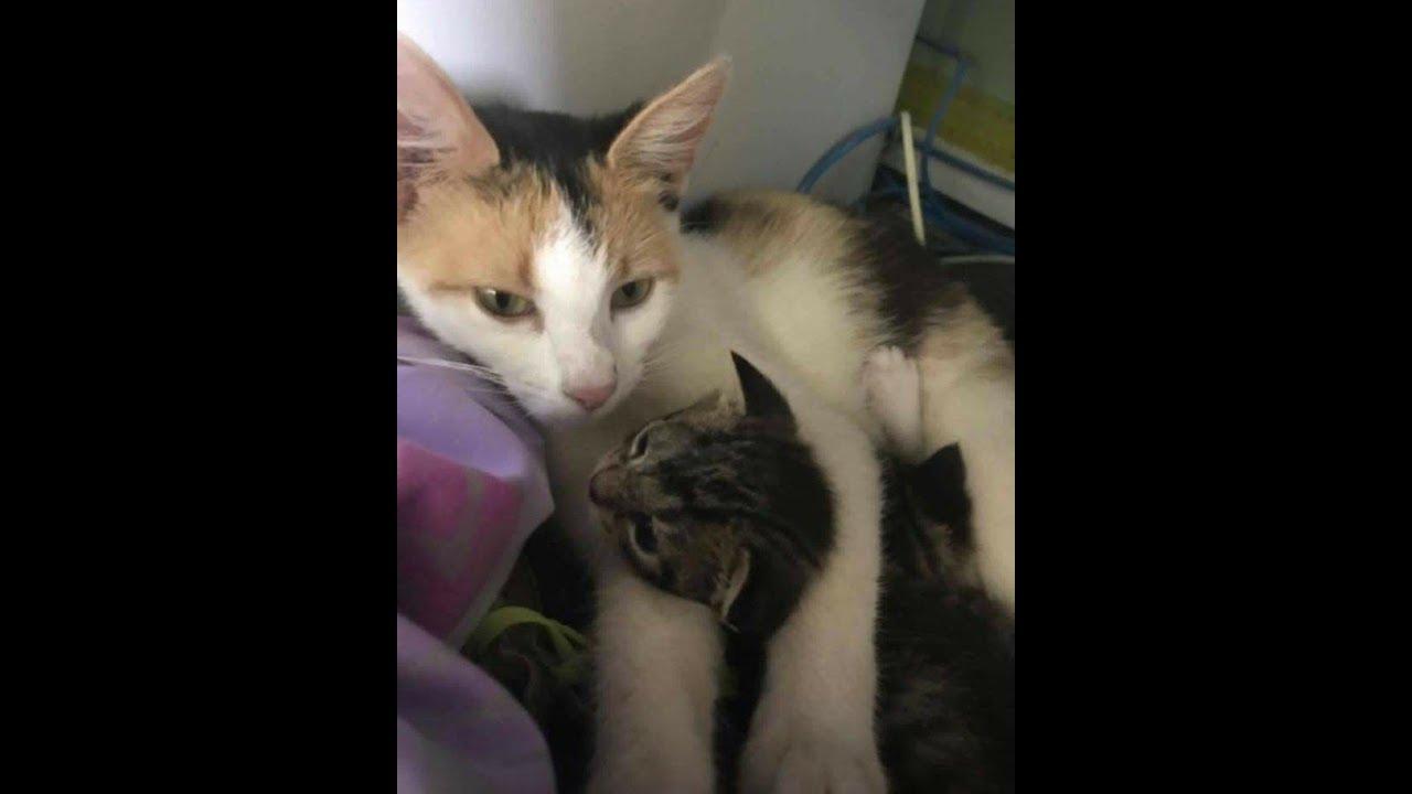ある日、仲良くなった野良猫が子猫を連れて現れた。さらに促されるまま後を追うと、助けが必要な別の子猫を発見!その後・・・【nekoの部屋】