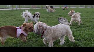 POV PHOTO SHOOT - EP. 1 DOG PARK