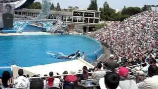 SeaWorld San Diego: Believe: The Spectacular Shamu Show - p3
