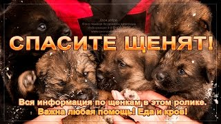 🙏🆘🐕Бездомные щенки замерзают Нужна помощь 🙏🆘🐕Homeless puppies freeze Need help