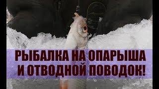 Рыбалка на опарыша и отводной поводок!