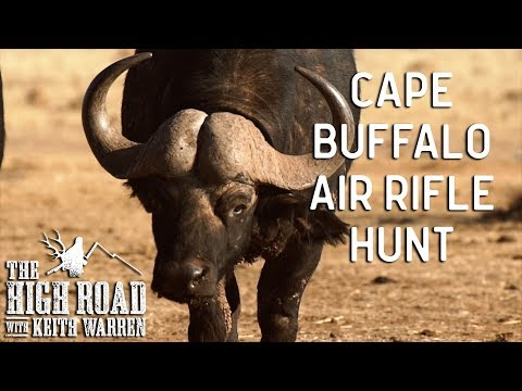 Air Rifle Hunting Cape Buffalo   The High Road with Keith Warren