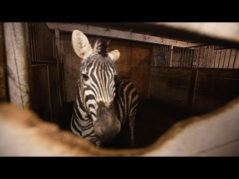 Exotic animals at a roadside zoo in Canada are rescued