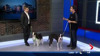 Reactive Dog Training Global Morning News Halifax
