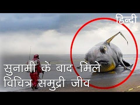 सुनामी के बाद मिले विचित्र समुद्री जीव | Strange Sea Creatures Discovered after Tsunami in Hindi