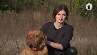 Бордосский дог - самая крупная собака в Приднестровье / Утренний эфир