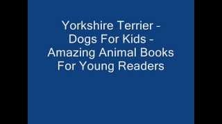 Yorkshire Terrier – Dogs For Kids – Amazing Animal Books For Young Readers