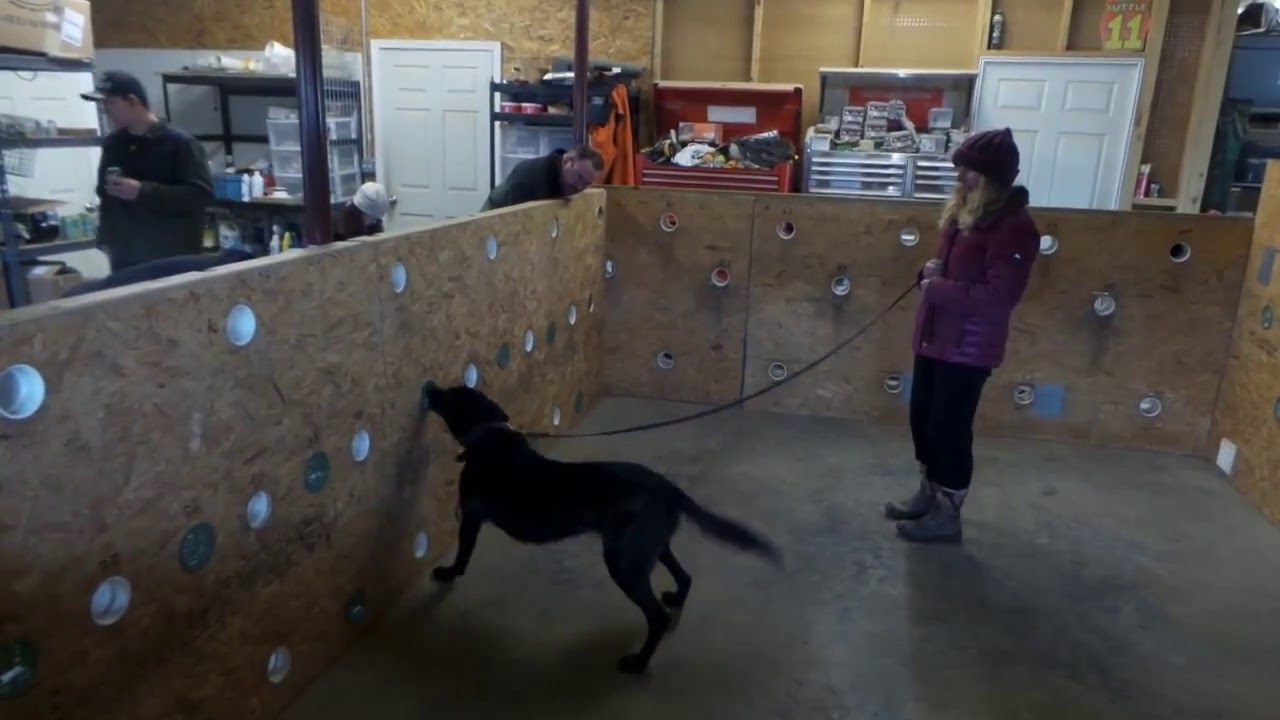 how to build a k9 scent wall