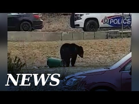 Bear season is back in Sudbury