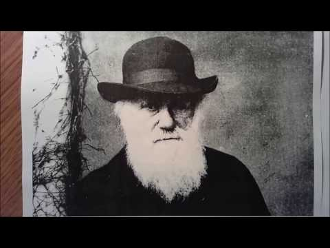 Archetypes in Human Evolution: Carl Jung meets Charles Darwin.