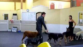 Dog Training - Pack Therapy At Leader Of The Pack Dog Training