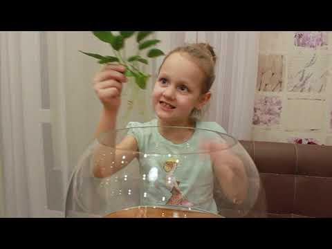 У Полины появился питомец   Аквариум   Рыбка-петушок Огонёк