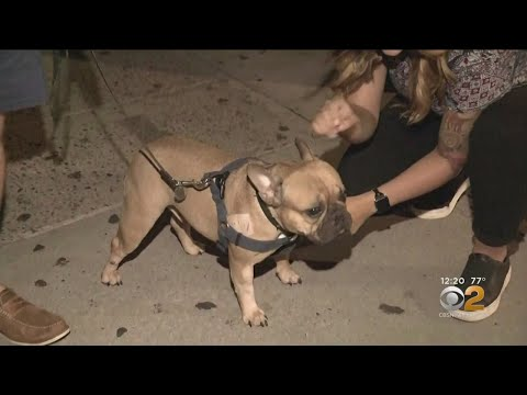 Pet Central - This little dog survives a 6 story fall through the sunroof of a car!