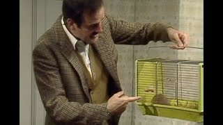 Fawlty Towers: Siberian hamster