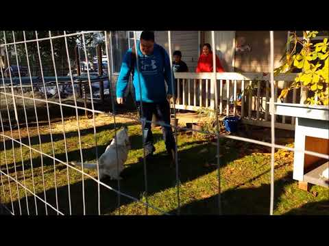 Fences For Fido - Sparky Unchained