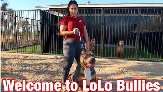 Welcome To LOLO Bullies