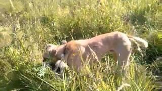 Собаки из приюта. г.Москва (Печатники). Орех, Пудра, Тедди.