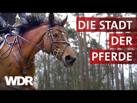 Warendorf - Ruhmreiche Pferdestadt | Heimatflimmern | WDR