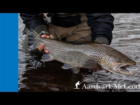 Fly Fishing For Sea Trout At Laxa I Kjos In Iceland