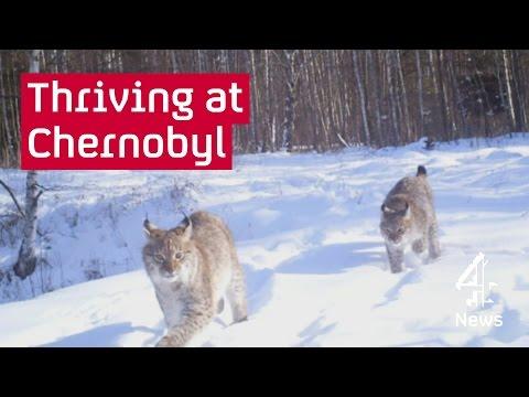 Chernobyl: inside the
