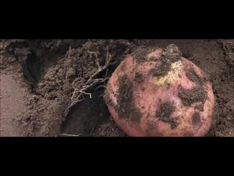 China will raise potatoes on the Moon