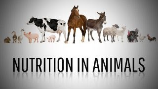 Nutrition in Animals: Class 7 Science