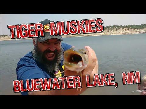 Bluewater, NM - Tiger Muskie Fishing