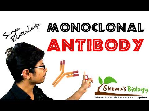 Monoclonal antibody | monoclonal antibody production using hybridoma technology
