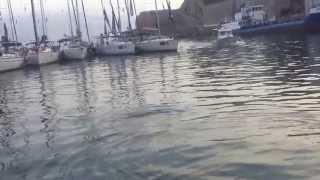 видео Тюлень-монах гавайский