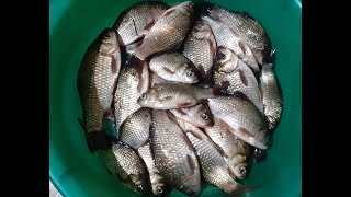 Активный клёв карася на озере рыбалка в мае