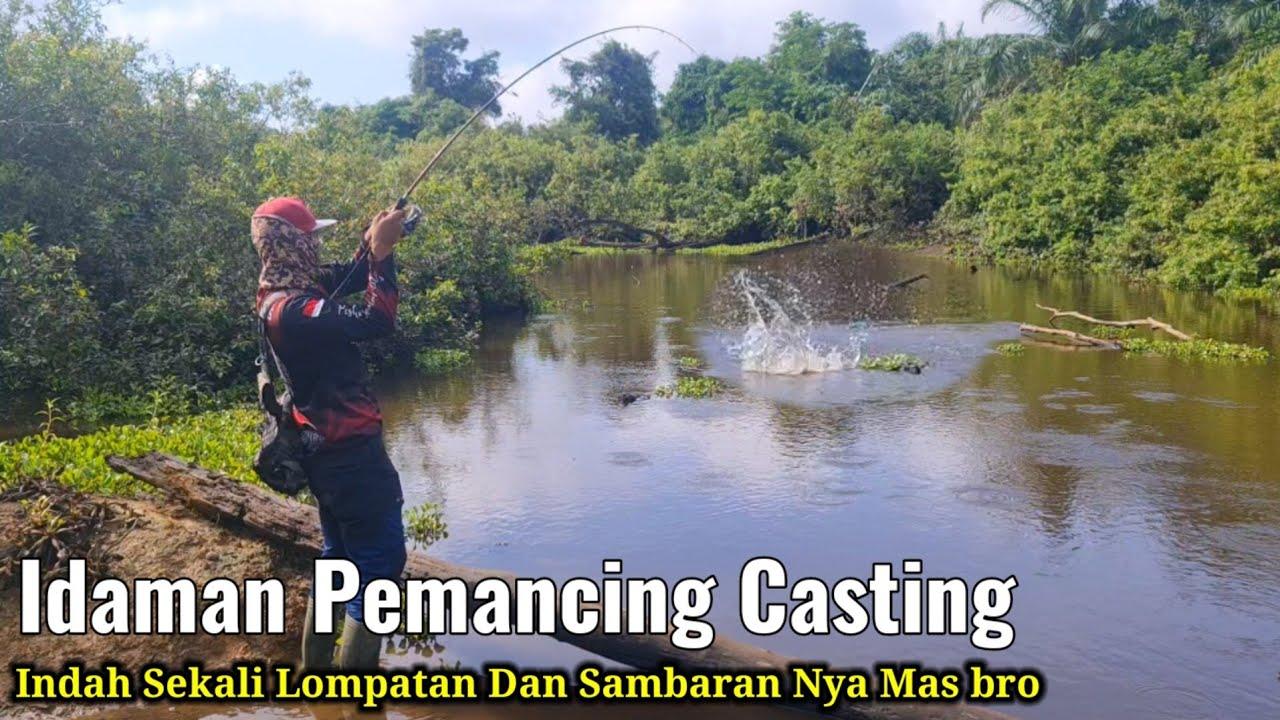 Download GANASNYA SAMBARAN PREDATOR DI PAGI HARI    CASTING DI SUNGAI MATI PEDALAMAN RAWA RIAU