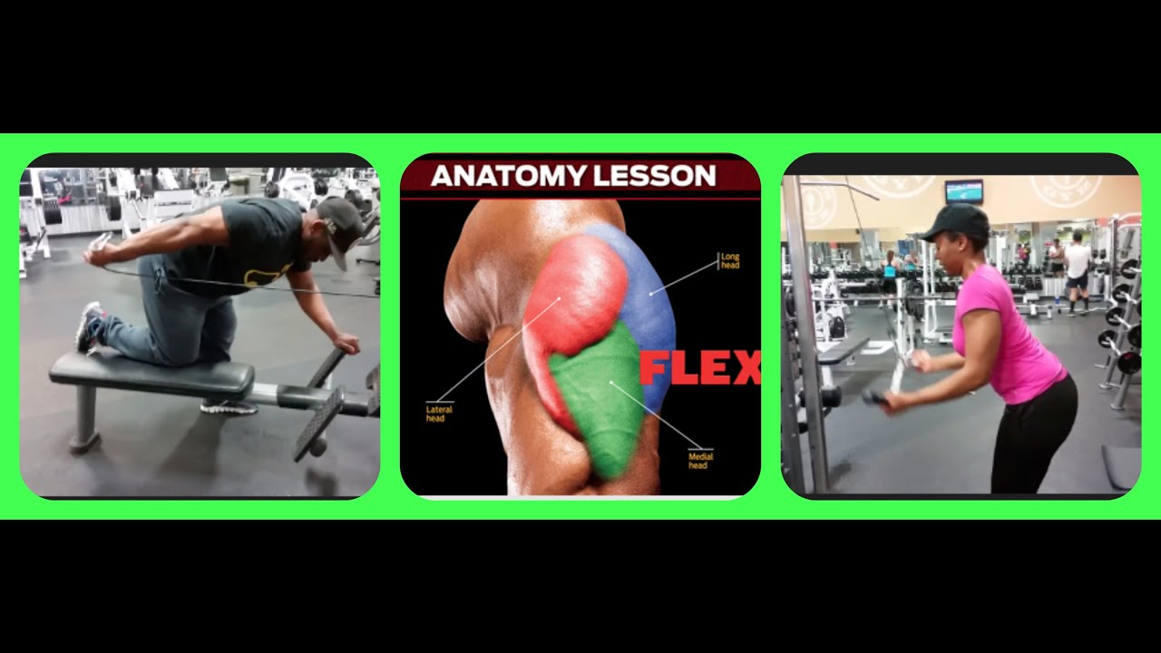 4 Exercises That Hit All 3 Triceps Heads Tricep Torture Workout