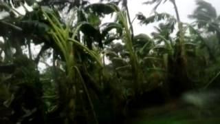 BAGYONG RUBY(HAGUPIT) IN BOGO CITY, CEBU ON DEC. 07 2014 AT 6:00 AM