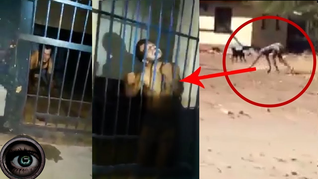 Download Has a real werewolf been found?  5 videos that will leave you speechless