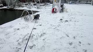 Мотя, первый снег, ужас, бежим домой