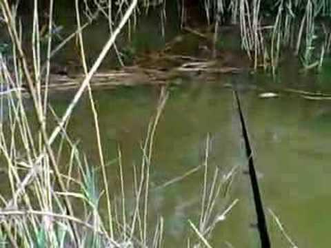 Stalking Carp at Whittlesey