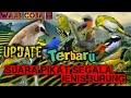 Suara Pikat Segala Jenis Burung Kecil Paling Ampuh Part   Mp3 - Mp4 Download