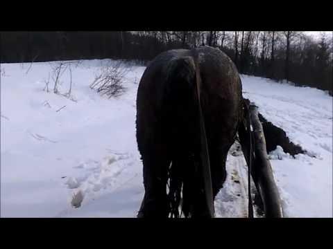 Odvoz hnoja na koní, Export manure on horse