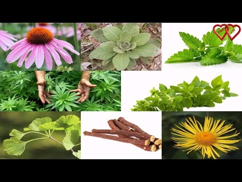 10 Herbal Remedies for Respiratory Problems