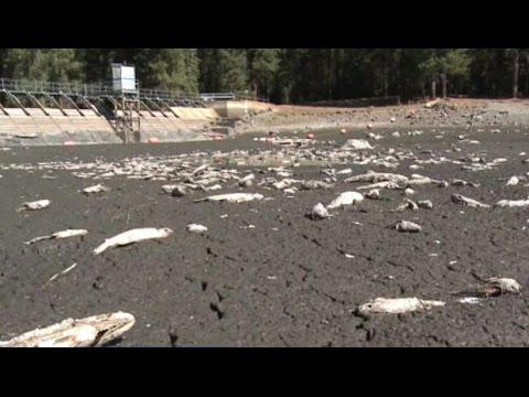 California Lake Runs Dry Overnight, Killing Thousands Of Fish